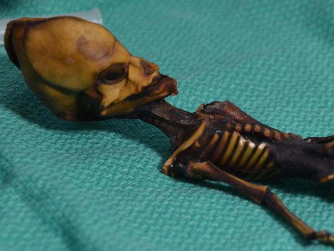 """Cile, svelato il mistero di «Ata»: lo scheletro """"alienoâ€� era di una bimba"""