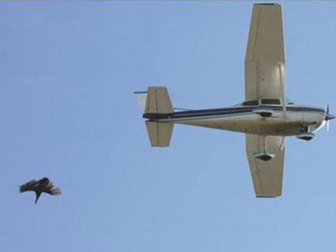 Lo sponsor si ritira: stop al lancio di tacchini vivi dall'aereo