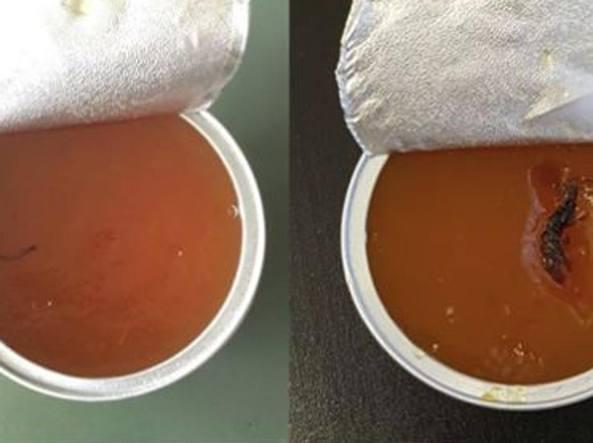 Insetti nelle mense scolastiche di Milano: ritrovati nelle confezioni di marmellata
