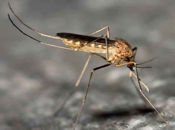 Cos'è il virus del Nilo