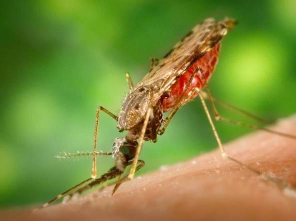 Le zanzare sono spacciate, ricercatore italiano scopre come annientarle