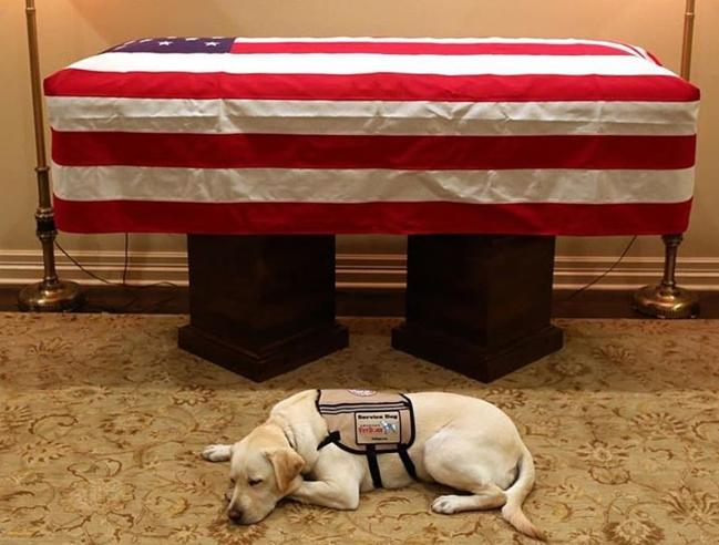 Sully il cane di Bush padre che veglia ancora il suo presidente