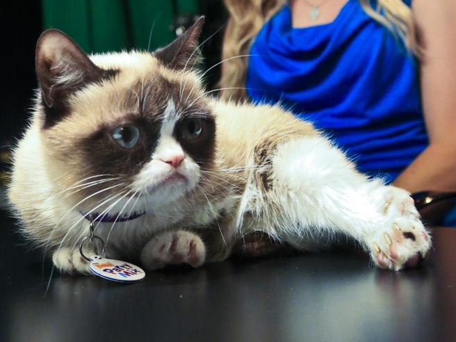 È morto il Grumpy Cat