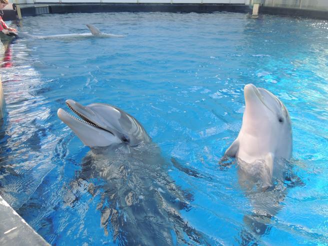 TripAdvisor si schiera con balene e delfini