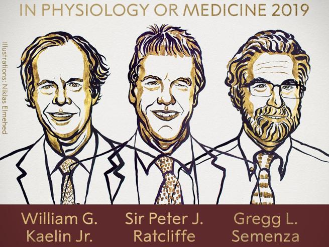 Premio Nobel per la Medicina 2019 assegnato a Kaelin, Ratcliffe e Semenza