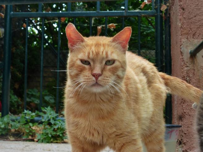 Gatto muore per il Lyssavirus. La padrona era stata morsa ora è sotto osservazione