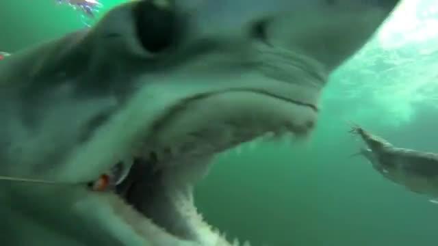 Il video dello squalo che addenta la preda, per fortuna solo un'esca