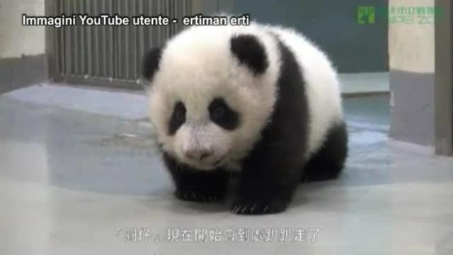 Mamma Panda Rimette A Letto Il Cucciolo Il Video Dolcissimo