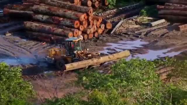 Il legno illegale distrugge l'Amazzonia - Corriere TV