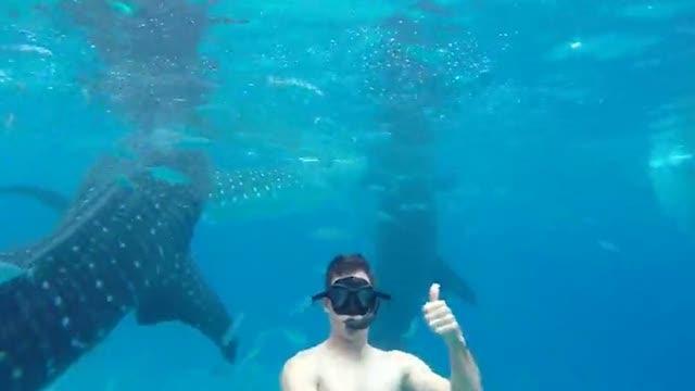 Nelle filippine si fa il bagno con gli squali corriere tv - Bagno con gli squali sudafrica ...