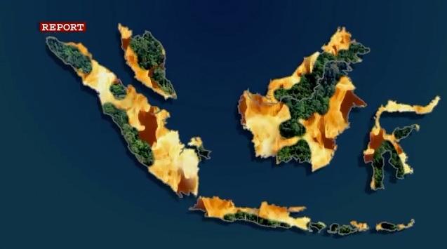 Friggere il pianeta, ovvero l'uso dell'olio di palma e le conseguenze