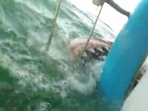 Incontro ravvicinato con uno squalo