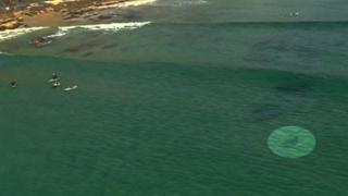 Squalo verso i surfisti in Australia