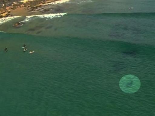 Elicottero Squalo : Australia squalo verso i surfisti l elicottero della tv