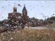 Invasione di locuste in Russia