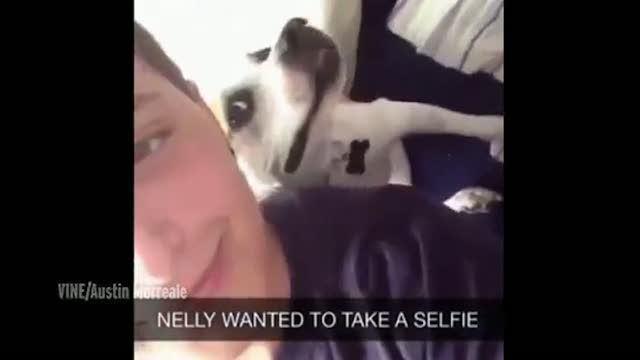 Nelly, il cane che si mette in posa per il selfie