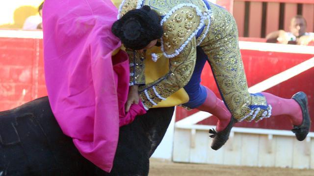 Spagna, incornato dal toro durante la corrida: grave il matador