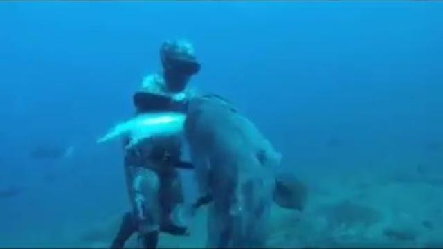 Il sub prende un pesce, ma lo aspetta una brutta sorpresa