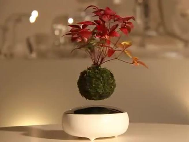 Ecco il bonsai che lievita in aria