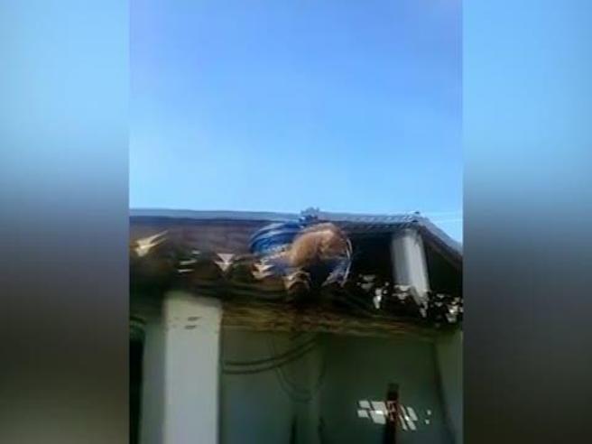 Brasile, macaco ubriaco e armato di machete terrorizza clienti del bar