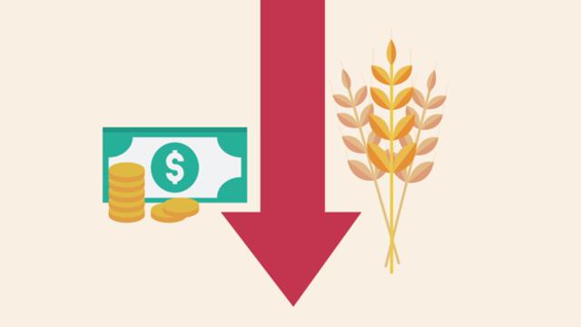 Il prezzo del grano precipita, mai così in basso dal 2009: cosa ...