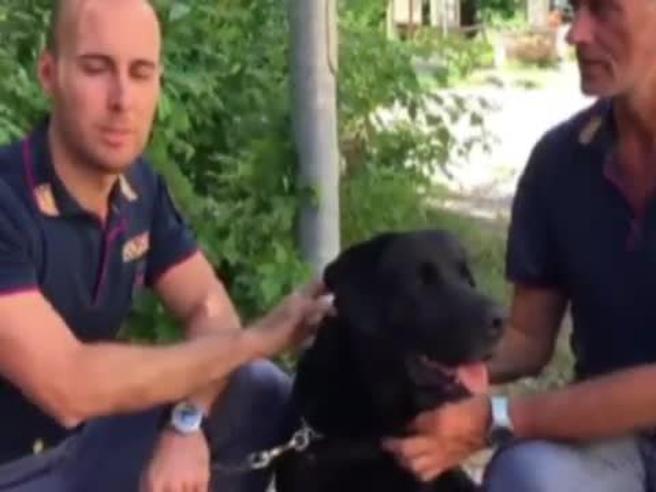 Leo, il labrador della polizia che ha salvato la piccola Giorgia dalle macerie VideoAnimali e sisma: foto