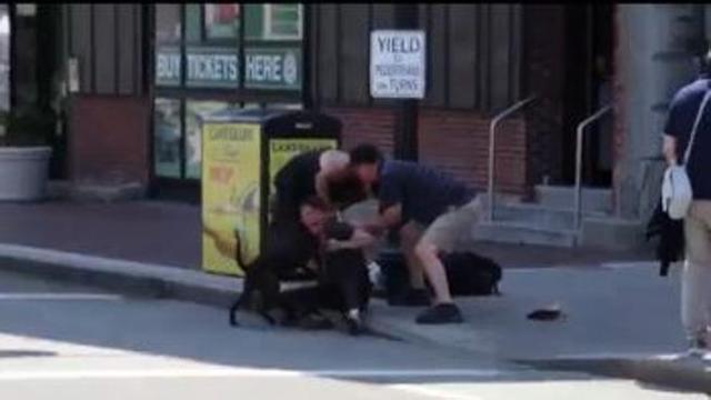 Persone Attaccate Da Pitbull.Pitbull Attacca Un Beagle E La Sua Padrona Urla E Paura Per Le