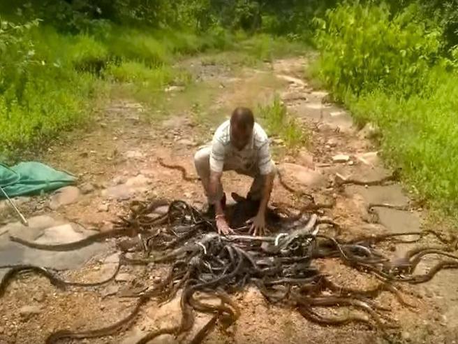 Dal sacco di questo acchiappa-serpenti escono 285 rettili