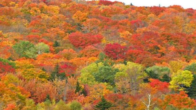 50 Sfumature Dautunno Le Splendide Immagini Del Foliage In Vermont