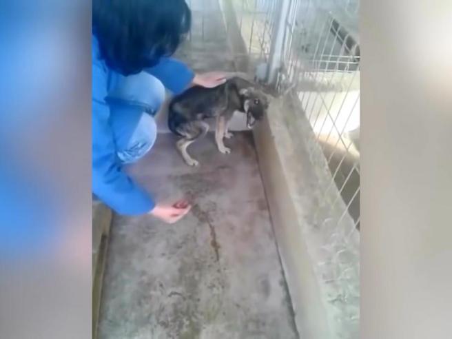 La prima carezza alla cagnolina maltrattata: ecco la sua reazione