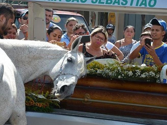 Il fedele destriero piange al funerale del suo proprietario