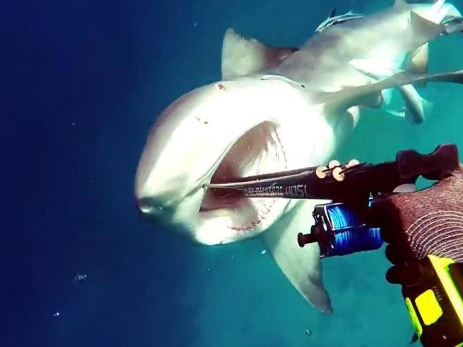 Paura in alto mare: lo squalo attacca il subacqueo (che filma tutta la scena)