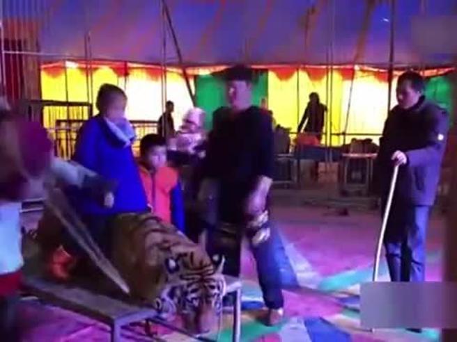 Circo cinese: legano la tigre per fare le foto con i turisti