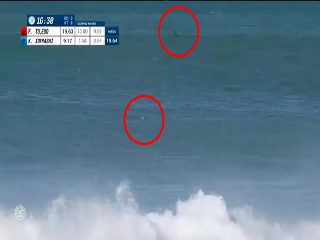 Il surfista in acqua per la gara, ma spunta la pinna dello squalo