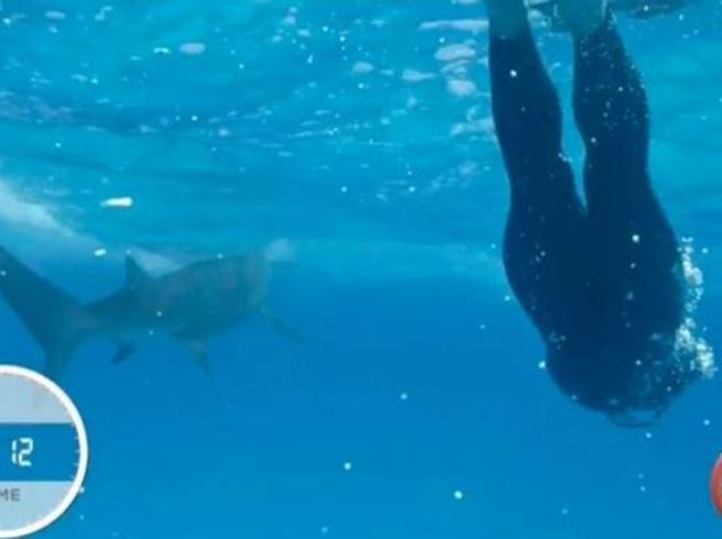 Phelps contro lo squalo:  persa la sfida contro lo Squalo Bianco (finto)