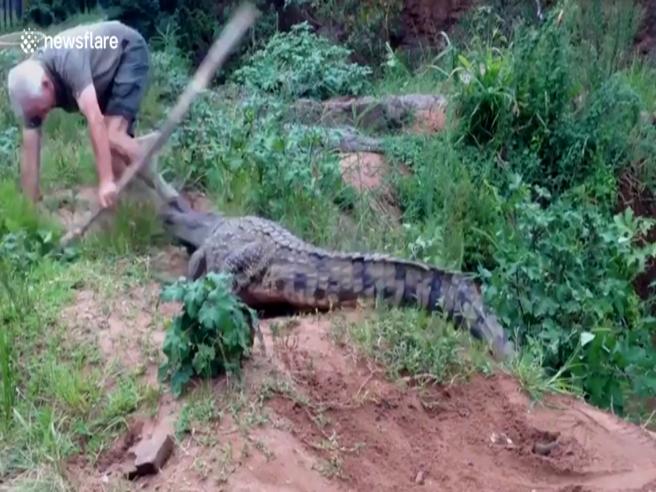 Stuzzica il coccodrillo con un bastone, ma non è una buona idea