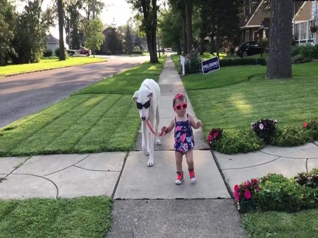 Il cane   (cieco e sordo) e la bambina: l'amicizia speciale