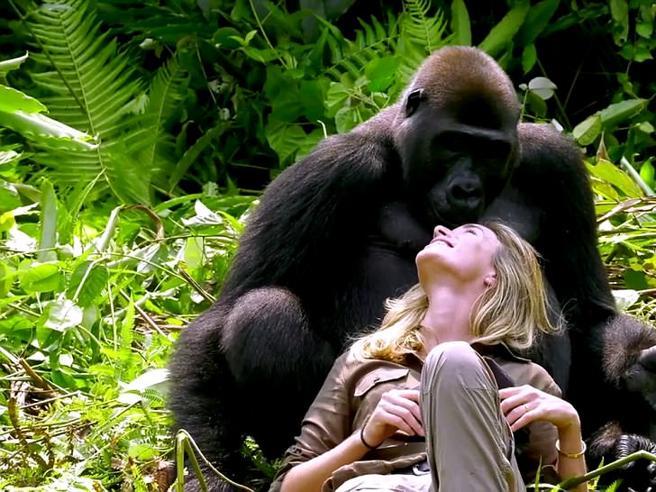 Il gorilla Irma rivede chi l'ha salvato: la sua reazione è tenerissima