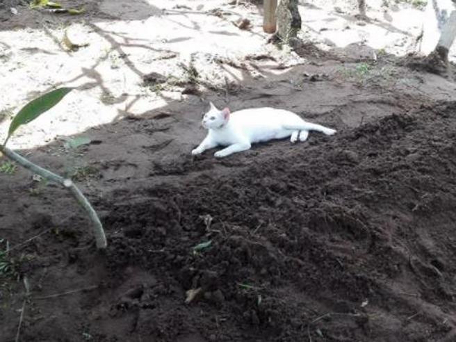 Il gatto non vuole lasciare la tomba del padrone, la scena commovente