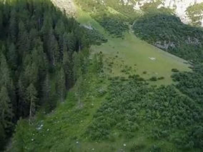 La solitudine dell'orso tra le Dolomiti del Brenta, il drone cattura le eccezionali immagini