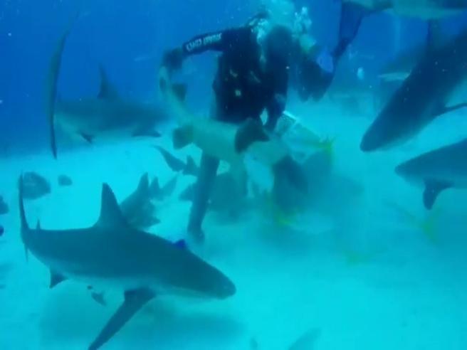 Il sub si arrabbia con lo squalo e gli tira un pugno sul naso
