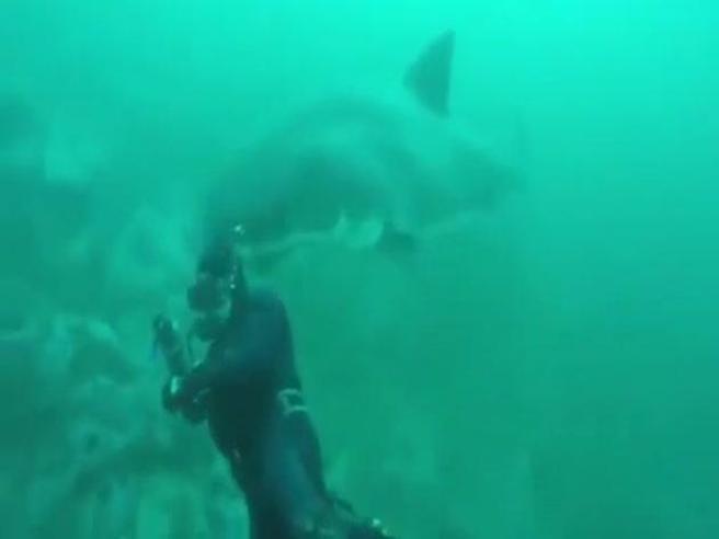 Il sub sorpreso alle spalle da un grande squalo bianco