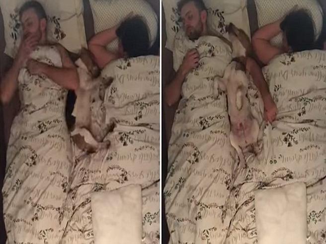 Lui, lei e il cane nel lettone: la notte (movimentata) in time-lapse
