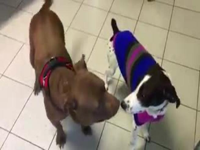 Gli auguri di buon anno da Freccia e Palla: i cani simbolo della lotta contro il maltrattamento degli animali