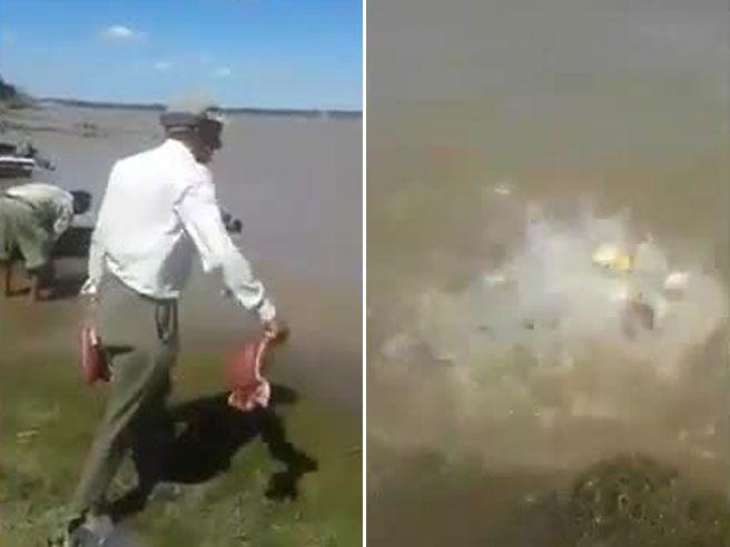 Argentina, i piranha invadono il fiume e arrivano a riva: così divorano le bistecche che gli lanciano