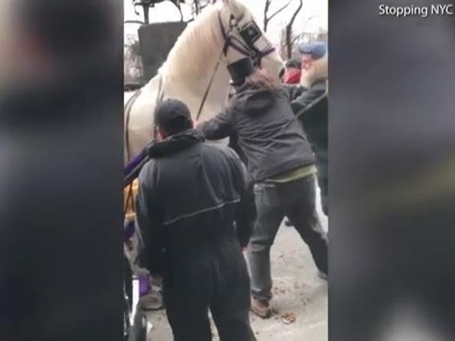 Il cavallo si spaventa e corre all'impazzata a Manhattan: tre feriti e auto danneggiate
