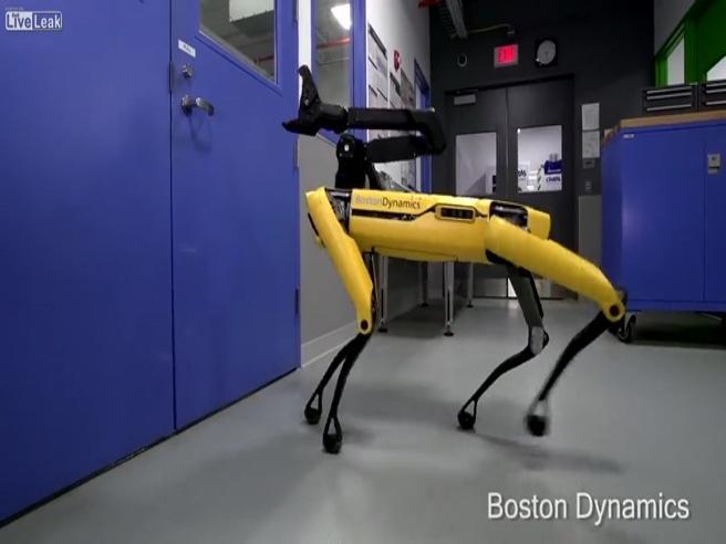 E il cane-robot ha imparato anche a aprire le porte