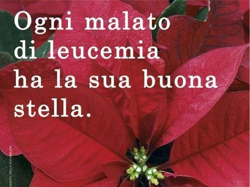 Airc Stella Di Natale.Stelle Di Natale Per La Ricerca Nelle Piazze Italiane Il 6 7 E 8 Dicembre Corriere It