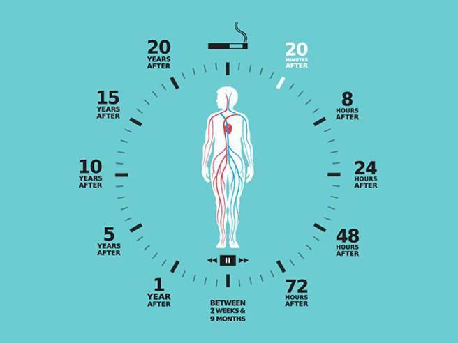 Da 20 minuti a 20 anni come cambia il corpo quando si for Quando si raccolgono i melograni