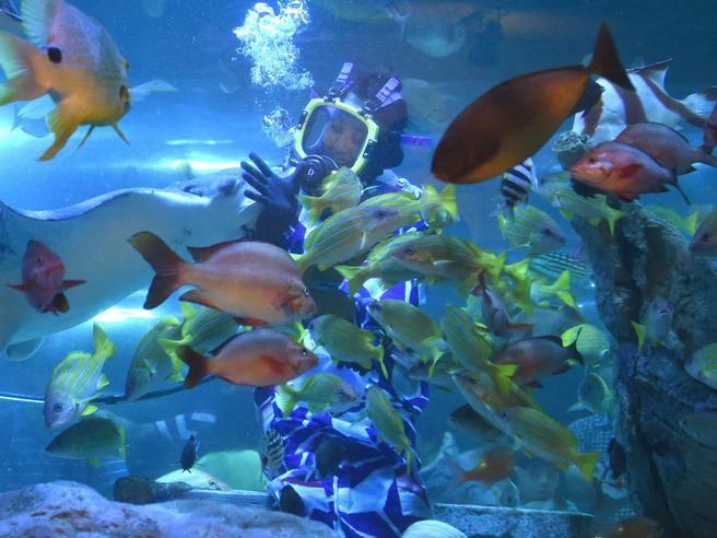 Quanti pesci ci sono nel mare for Immagini con i brillantini